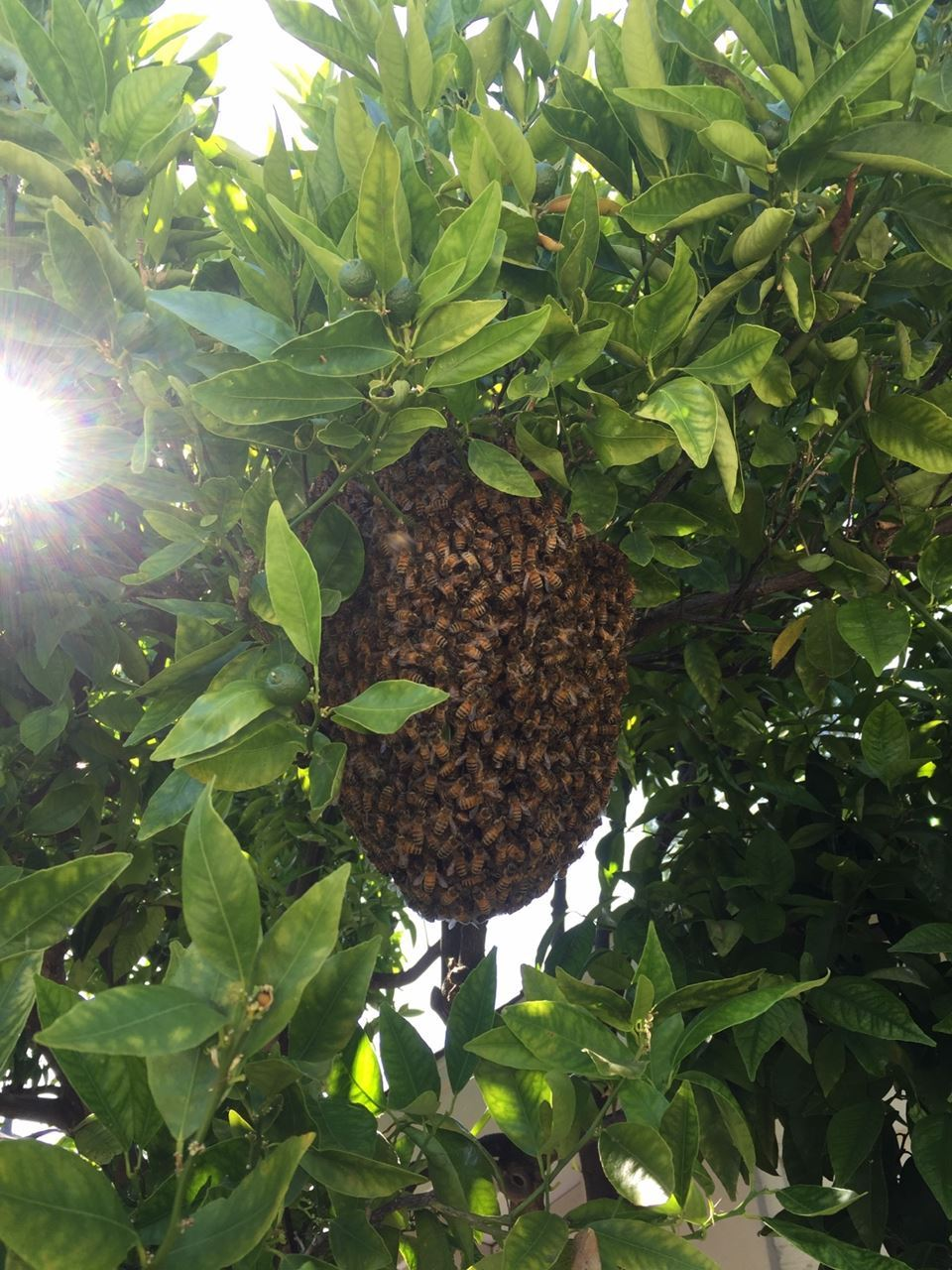 A Perfect Swarm.